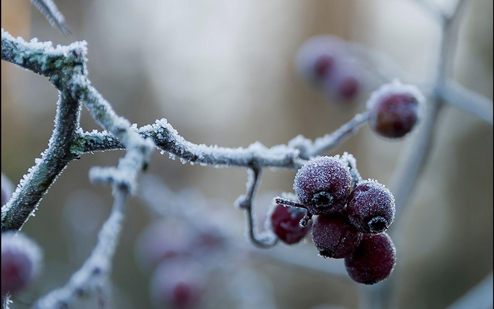 Шарик ветка иней The ball branch frost без смс