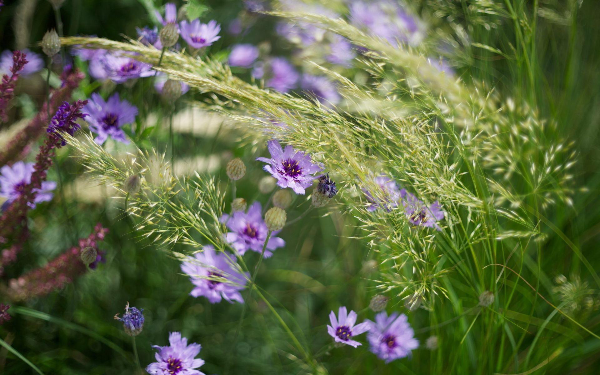 вещь, фото июль цветы на рабочий стол сожалению съёмку меня