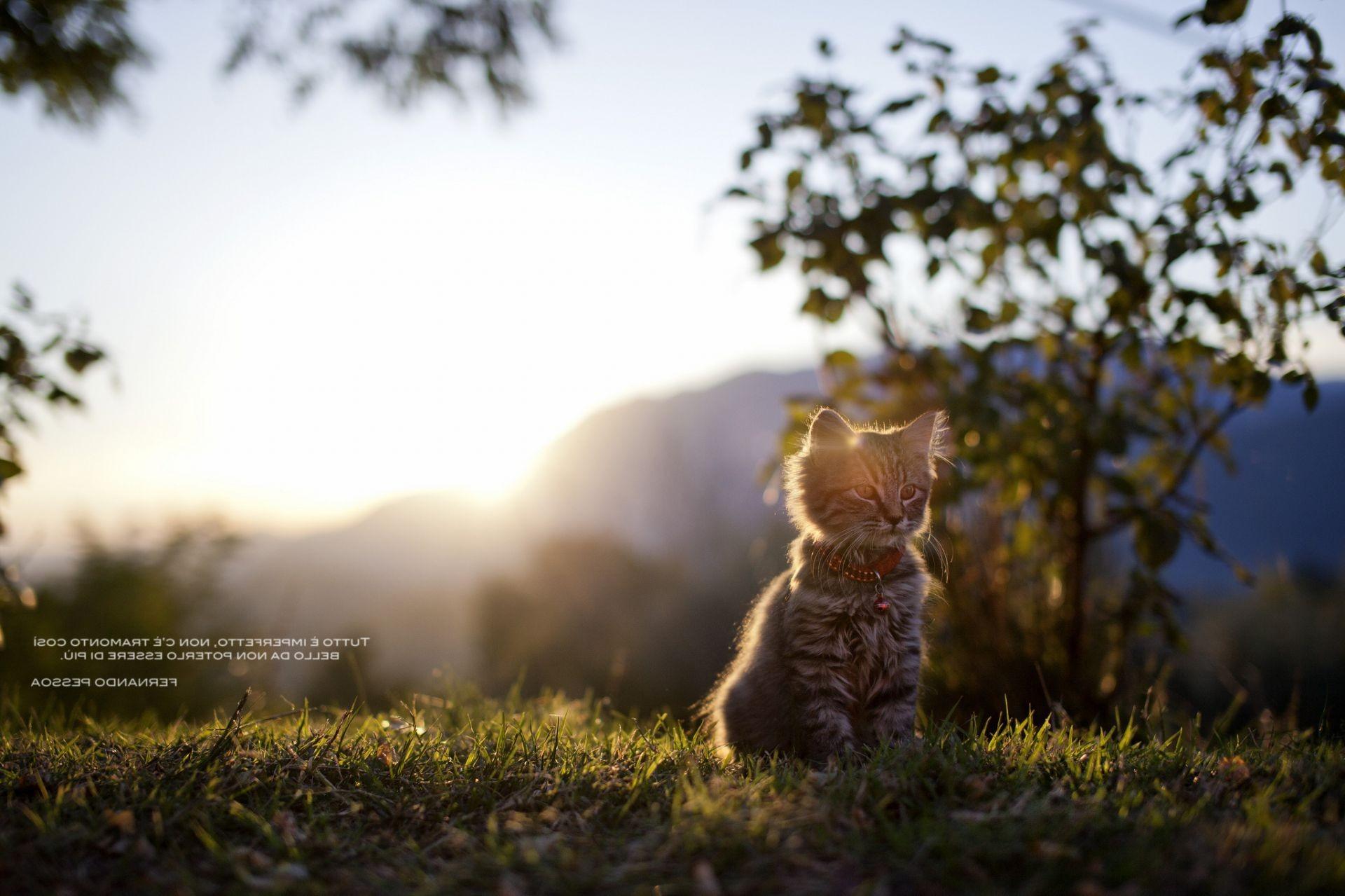 природа животные кот белый бесплатно
