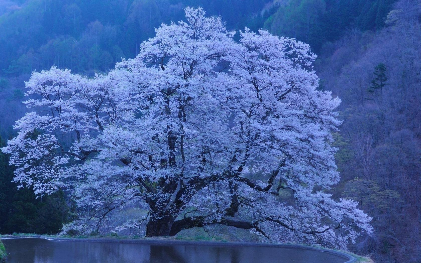 Озеро дерево обрыв цветущее скачать