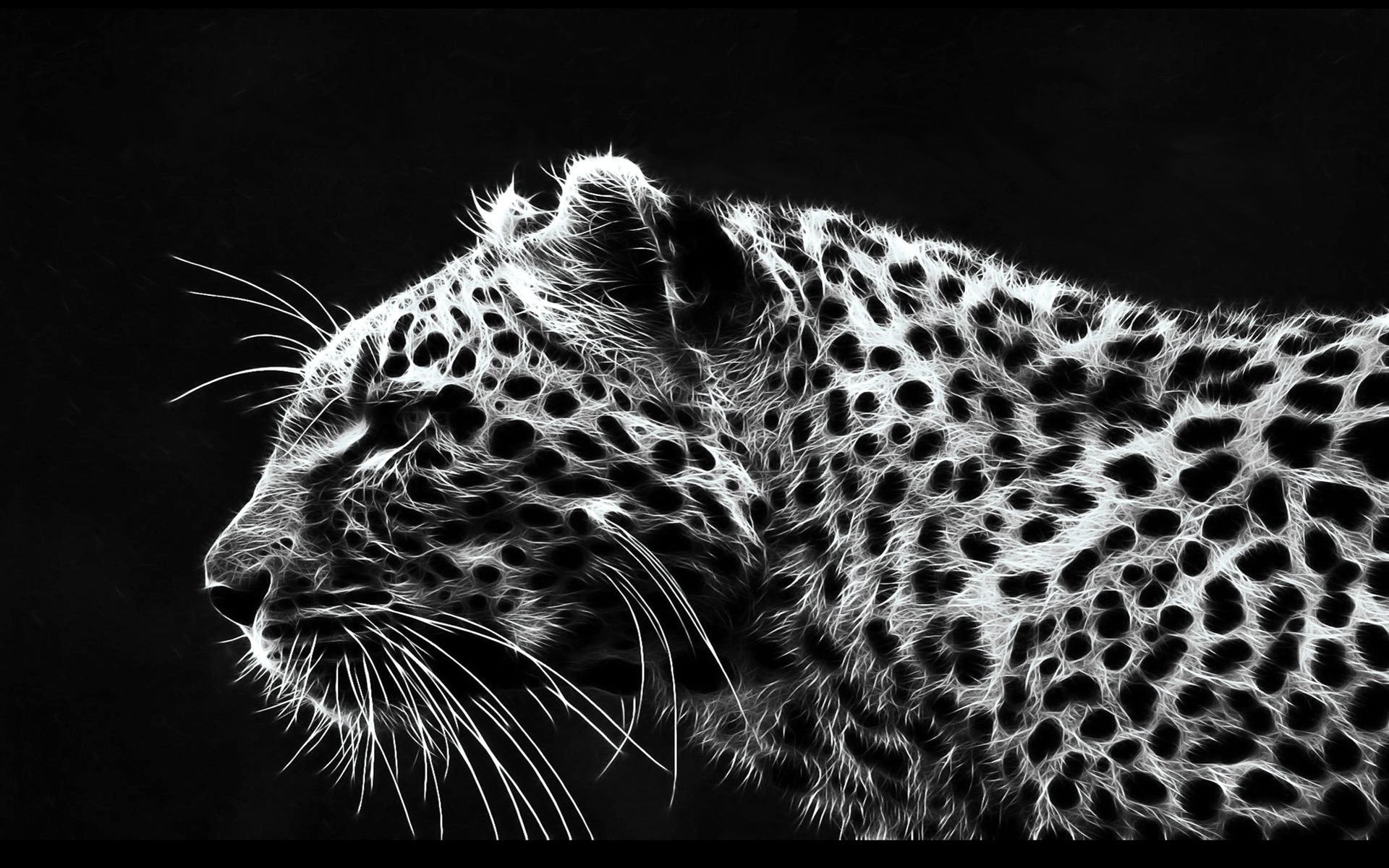 white cheetah wallpaper hd - photo #12