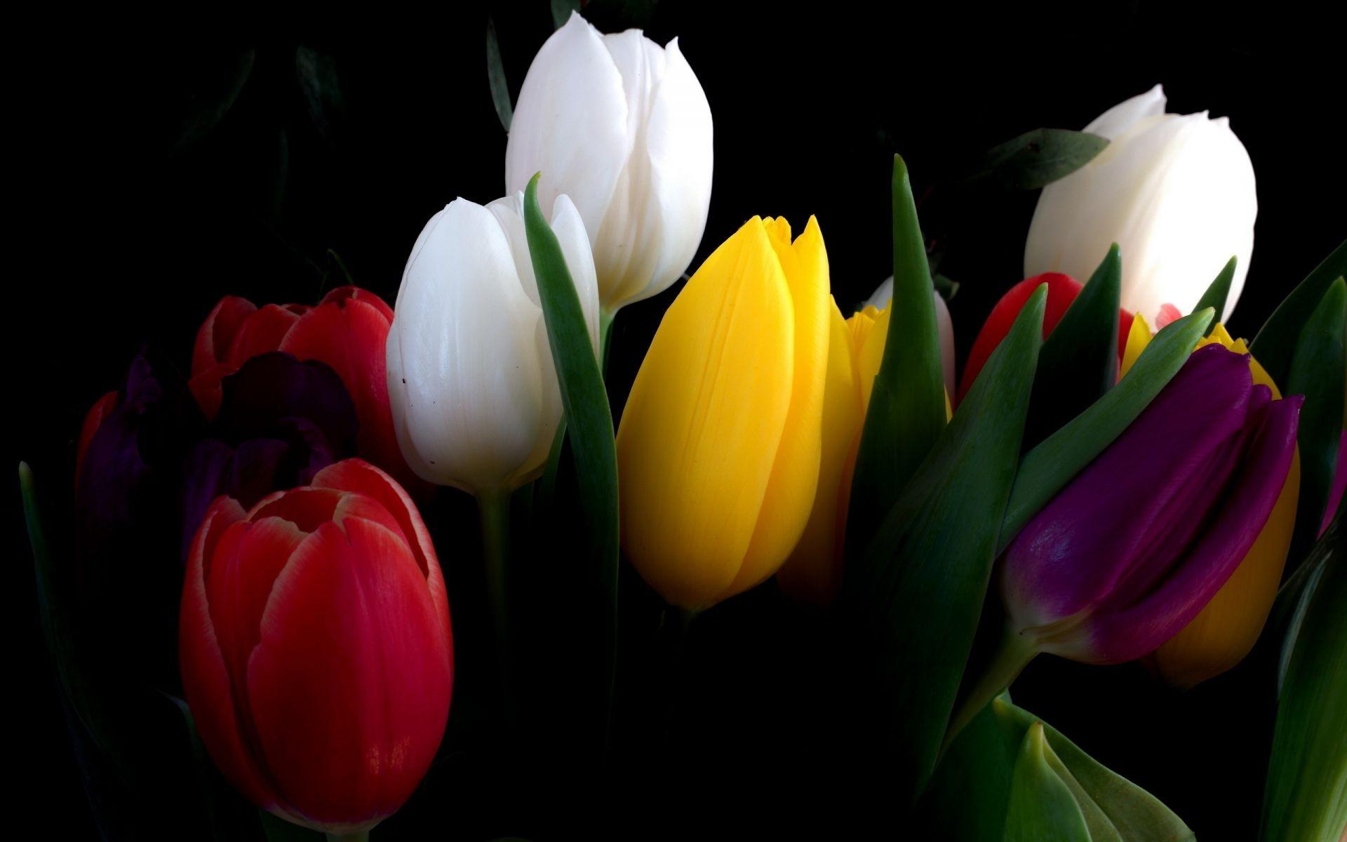 Тюльпаны картинки на телефон, открытки поздравлением