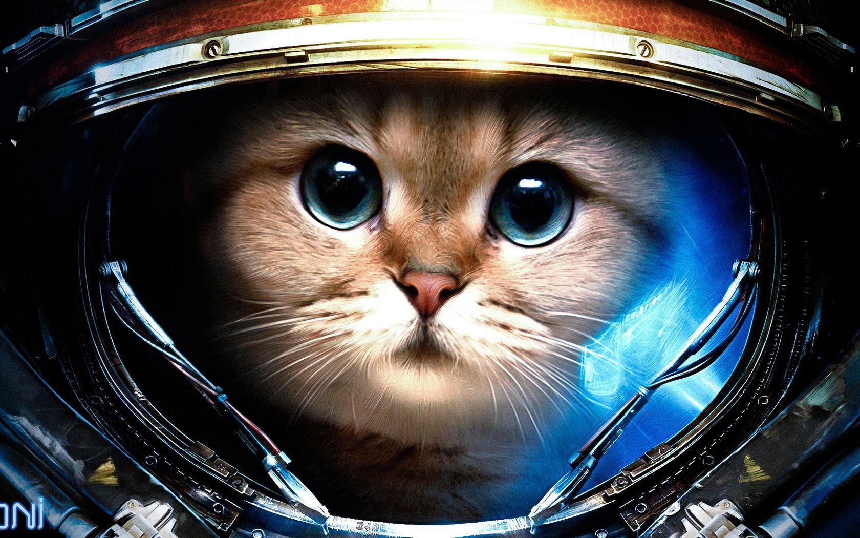 гравюра кошки фото