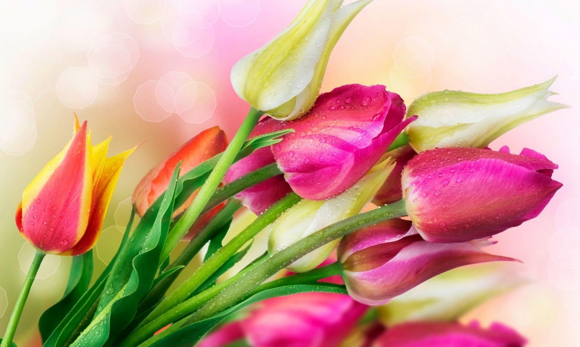 Картинки с тюльпанами на рабочий стол во весь экран
