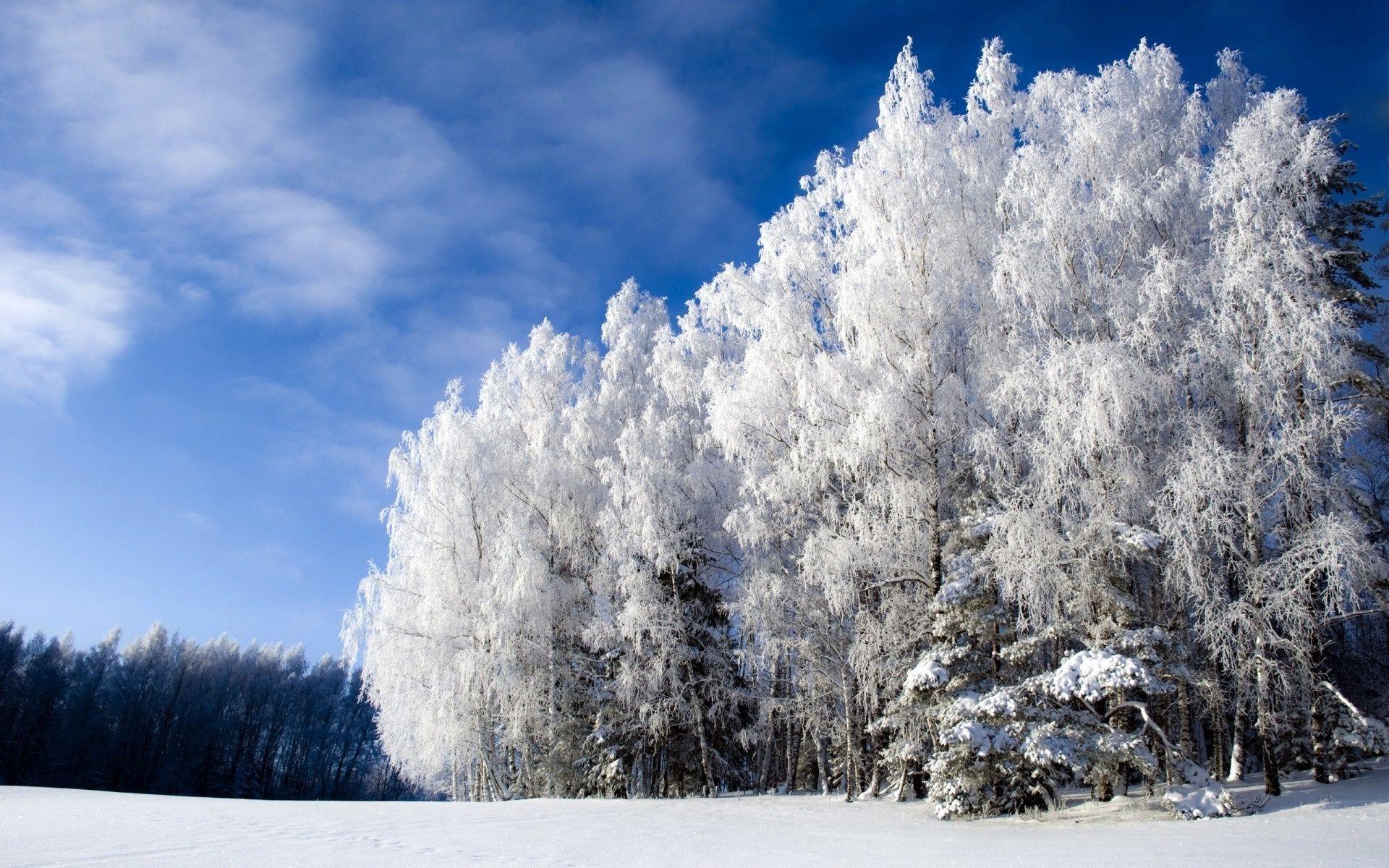 Фото природы зимой в высоком качестве