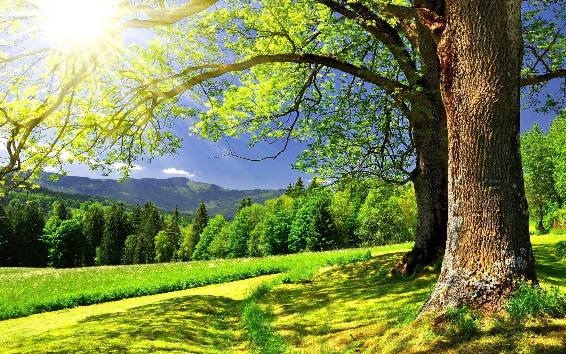 Пейзаж лес лето деревья скачать обои