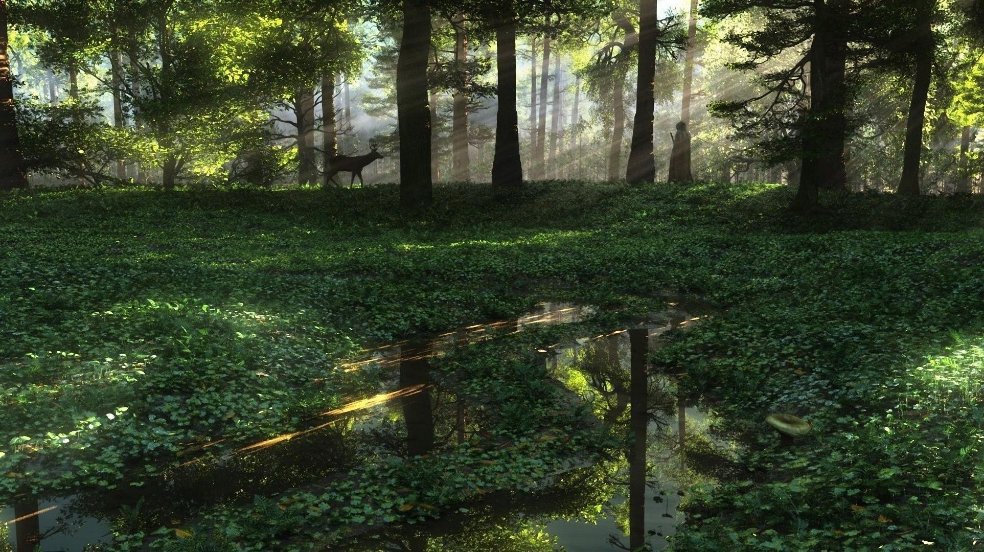 Арт лужи лес косуля солнечные лучи