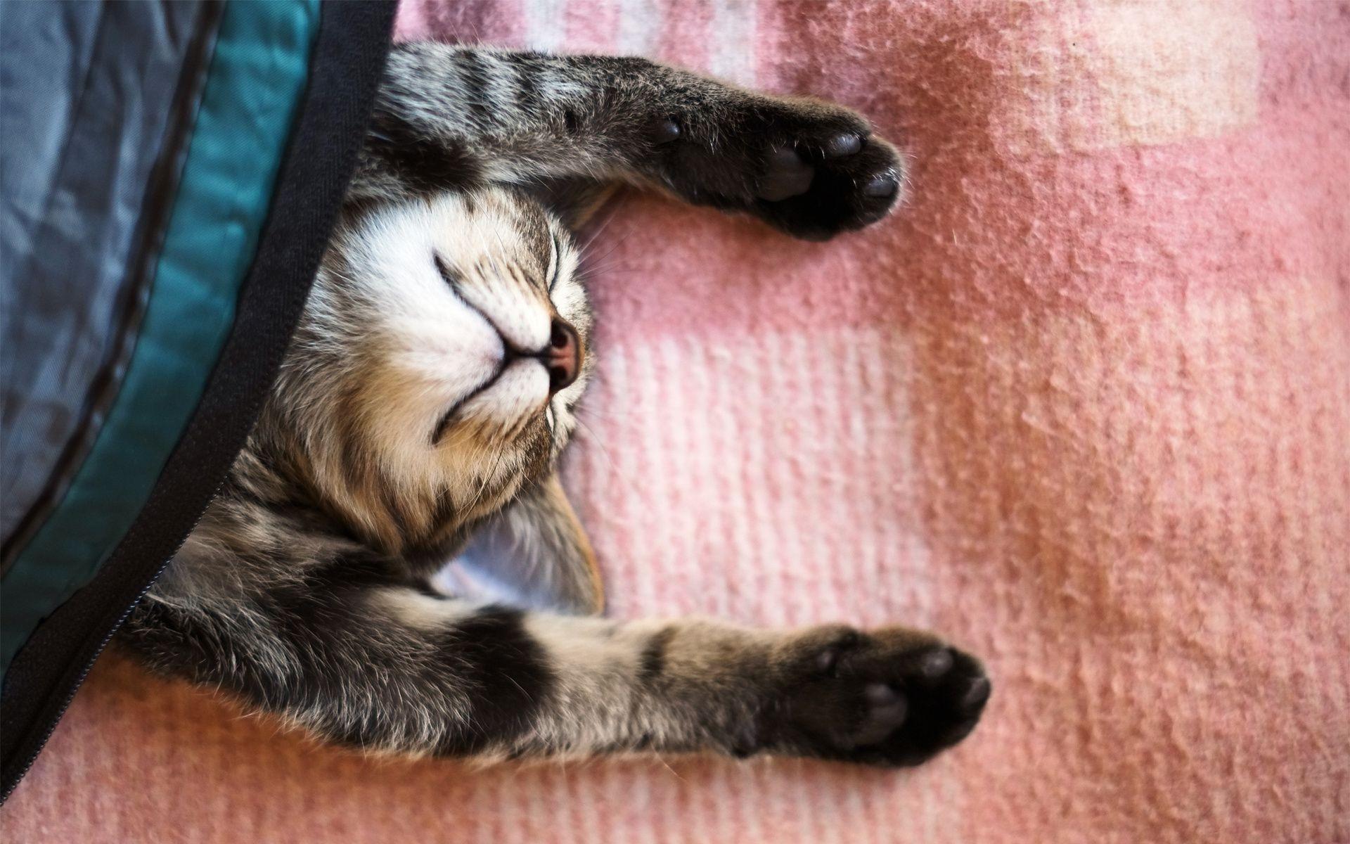 Уставший кот скачать