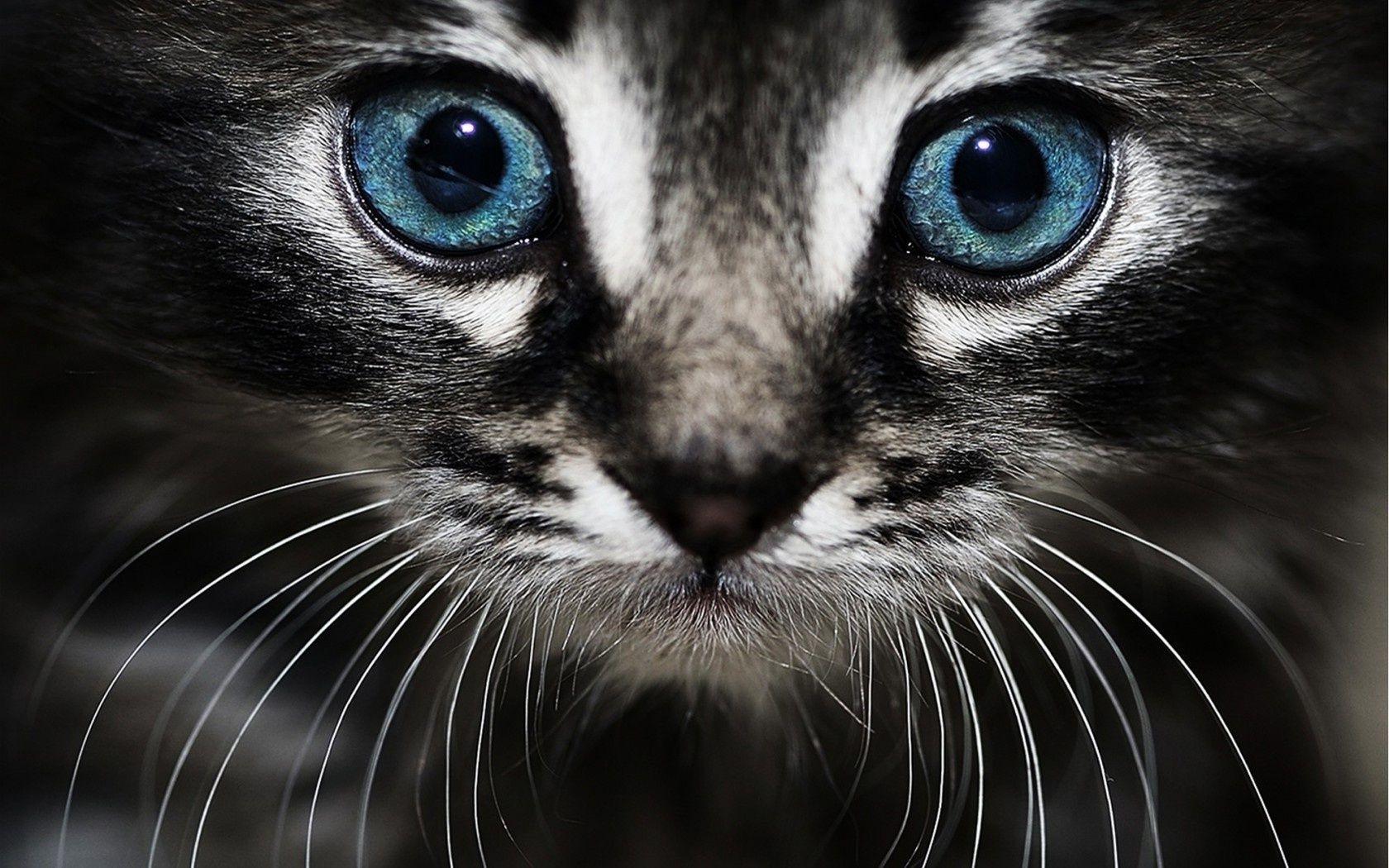 Скучала очень, картинки на телефон глаза животных
