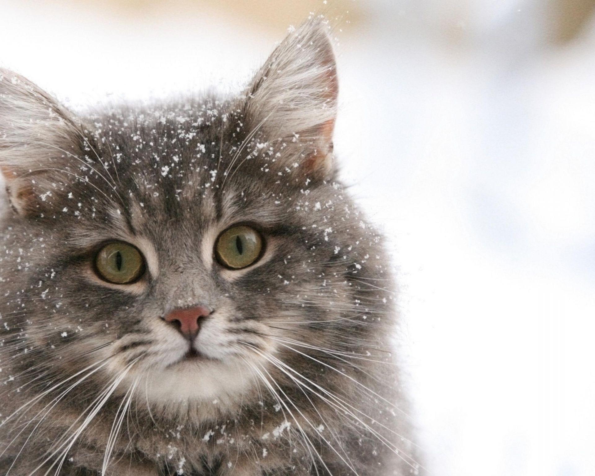Картинки кот морской
