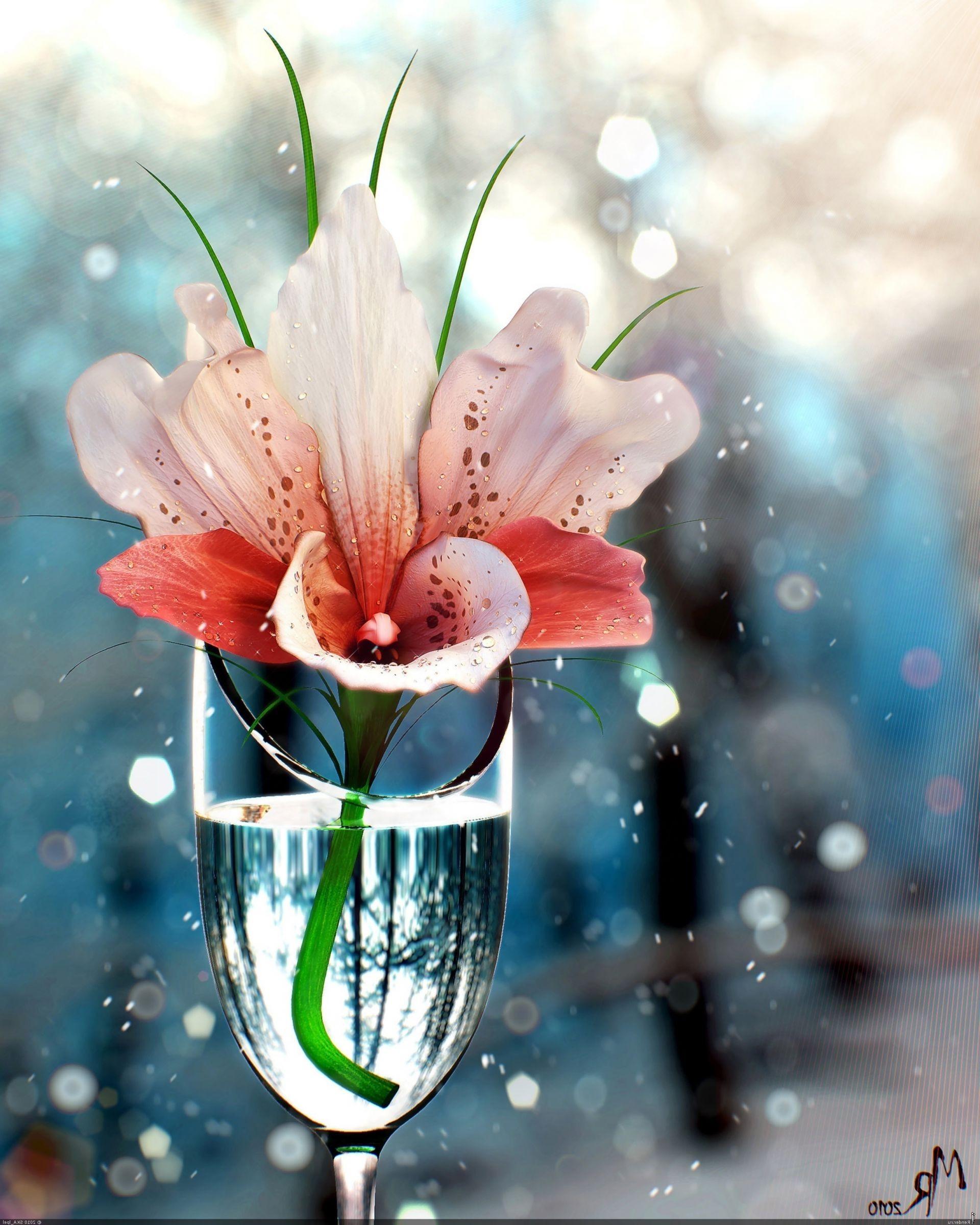 Тему, открытки цветы на воде