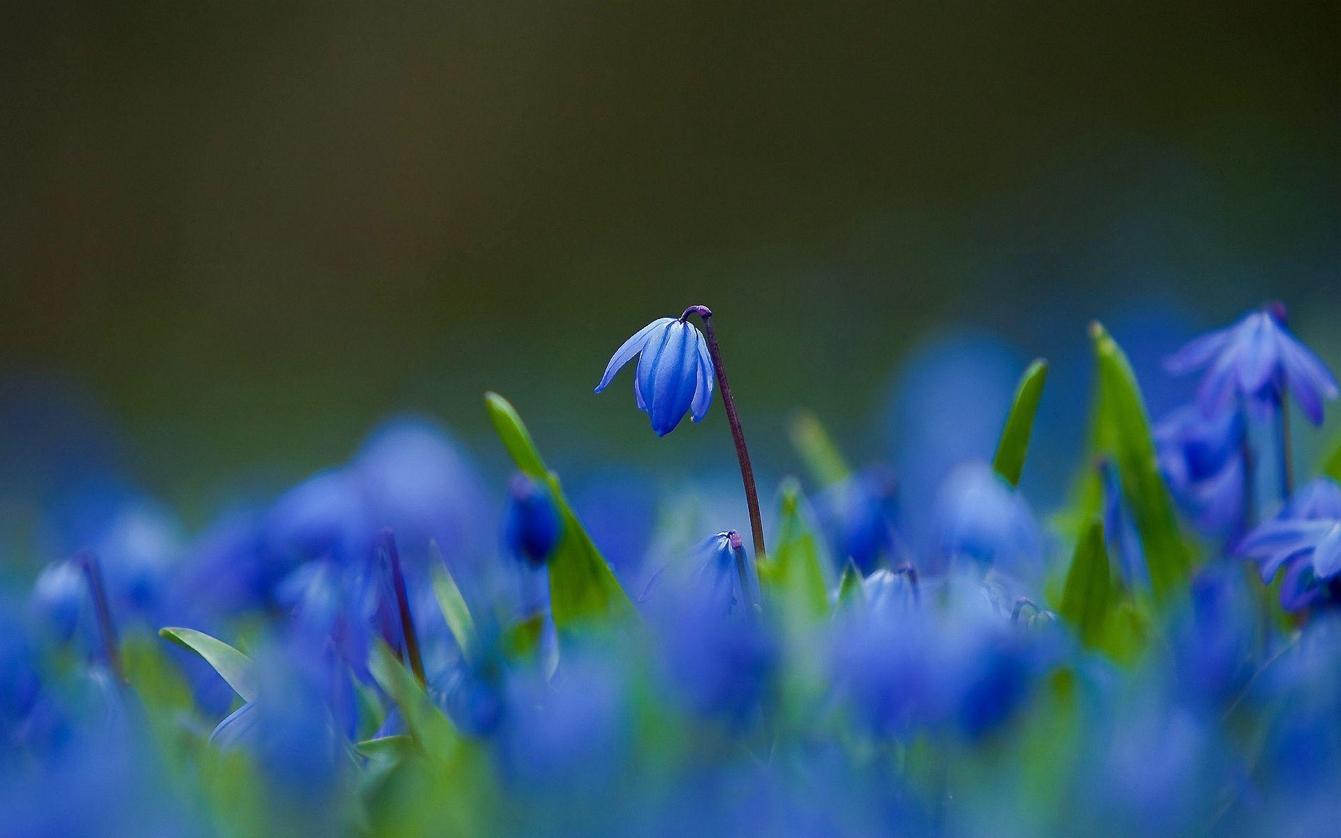 Обои размытость, цветы. Цветы foto 19