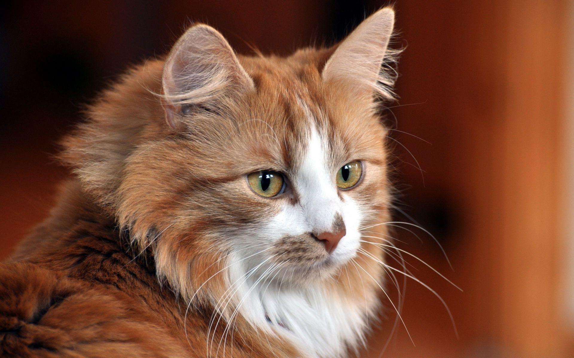 Прикольное добрым, коты фото красивые коты фото красивые