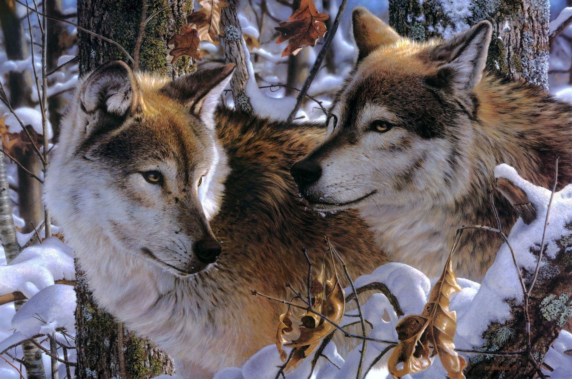 Волк портрет