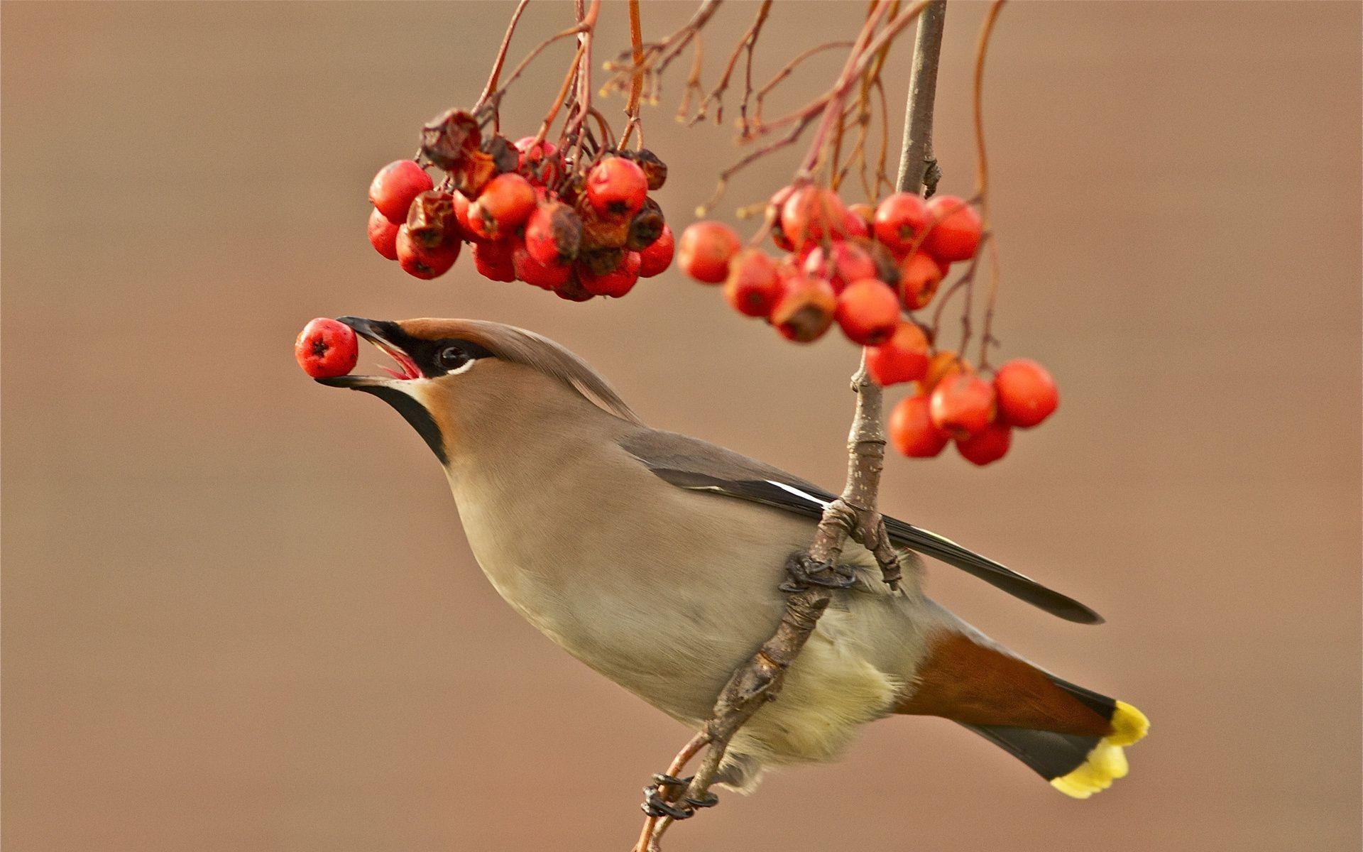 Обои Птичка, семена. Животные foto 15