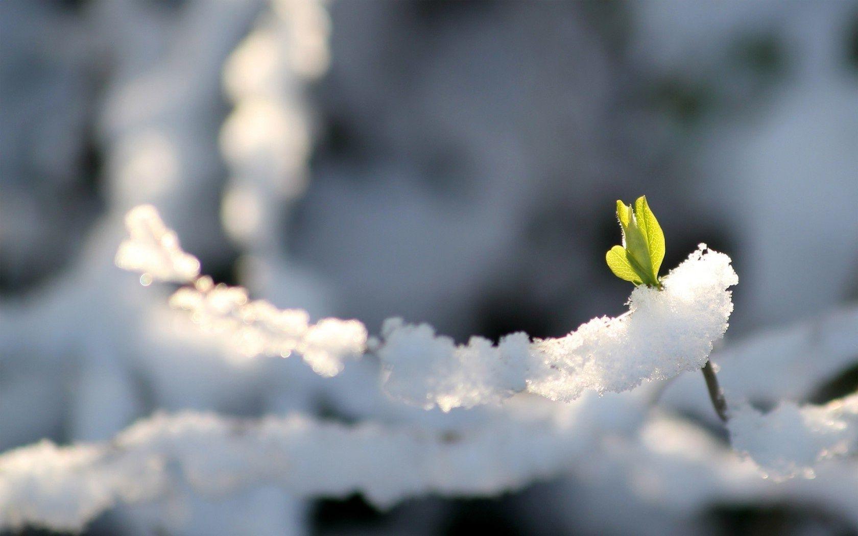 Картинки тает снег начало весны, ссср новым годом