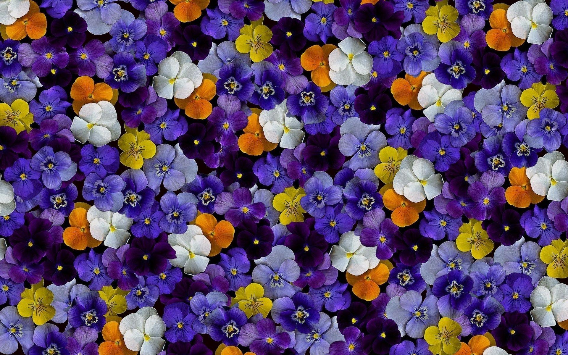 обои лето цветы на рабочий стол скачать бесплатно