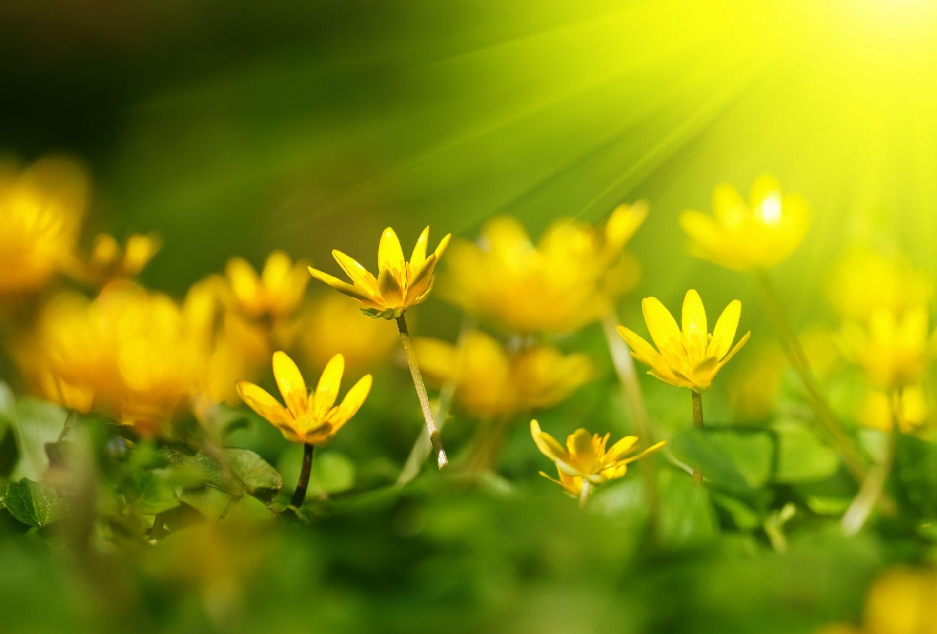 желто зеленые картинки на природе разные виды мозаики