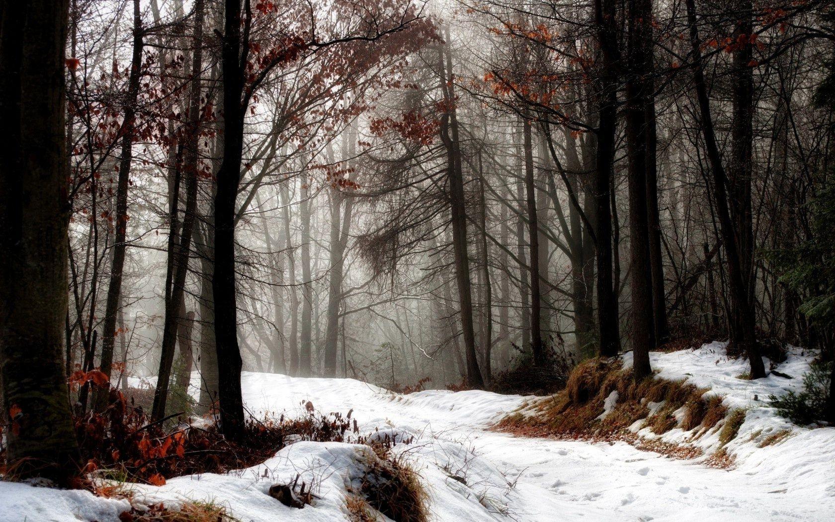 картинка дремучий лес зимний всего один