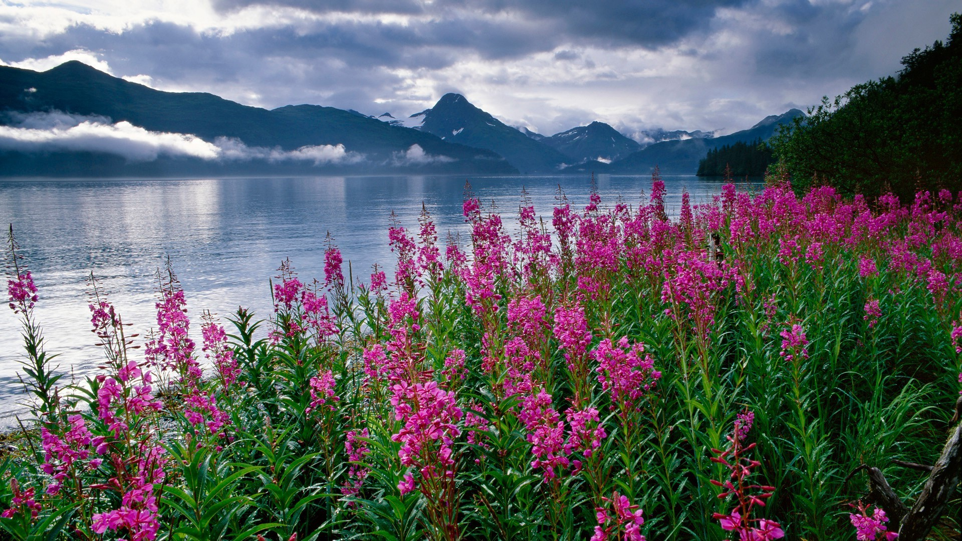 обои на рабочий стол лето вода природа цветы ужасное, горят несколько