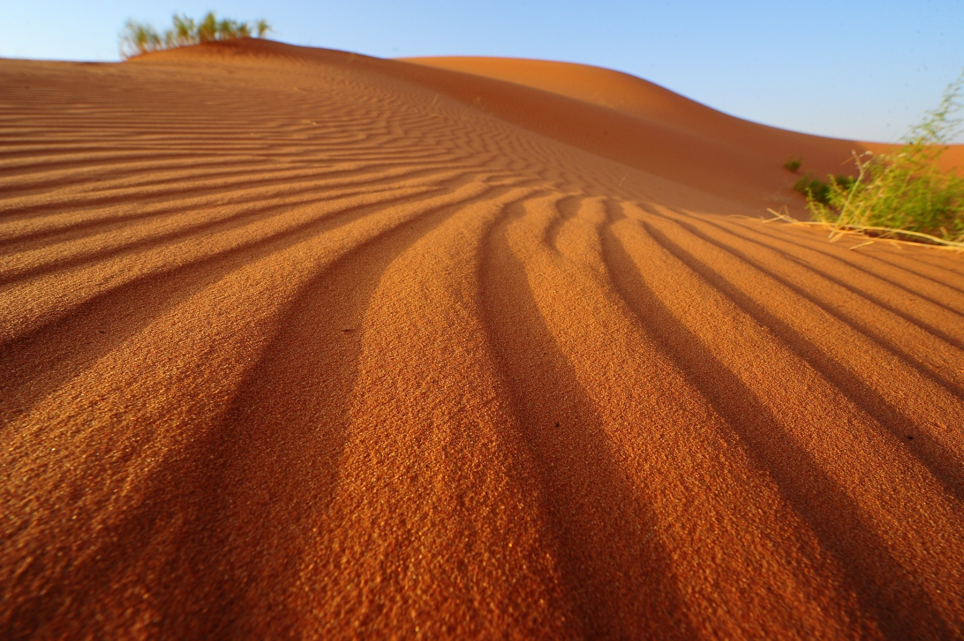 песочные картинки африка столовую, куда попали