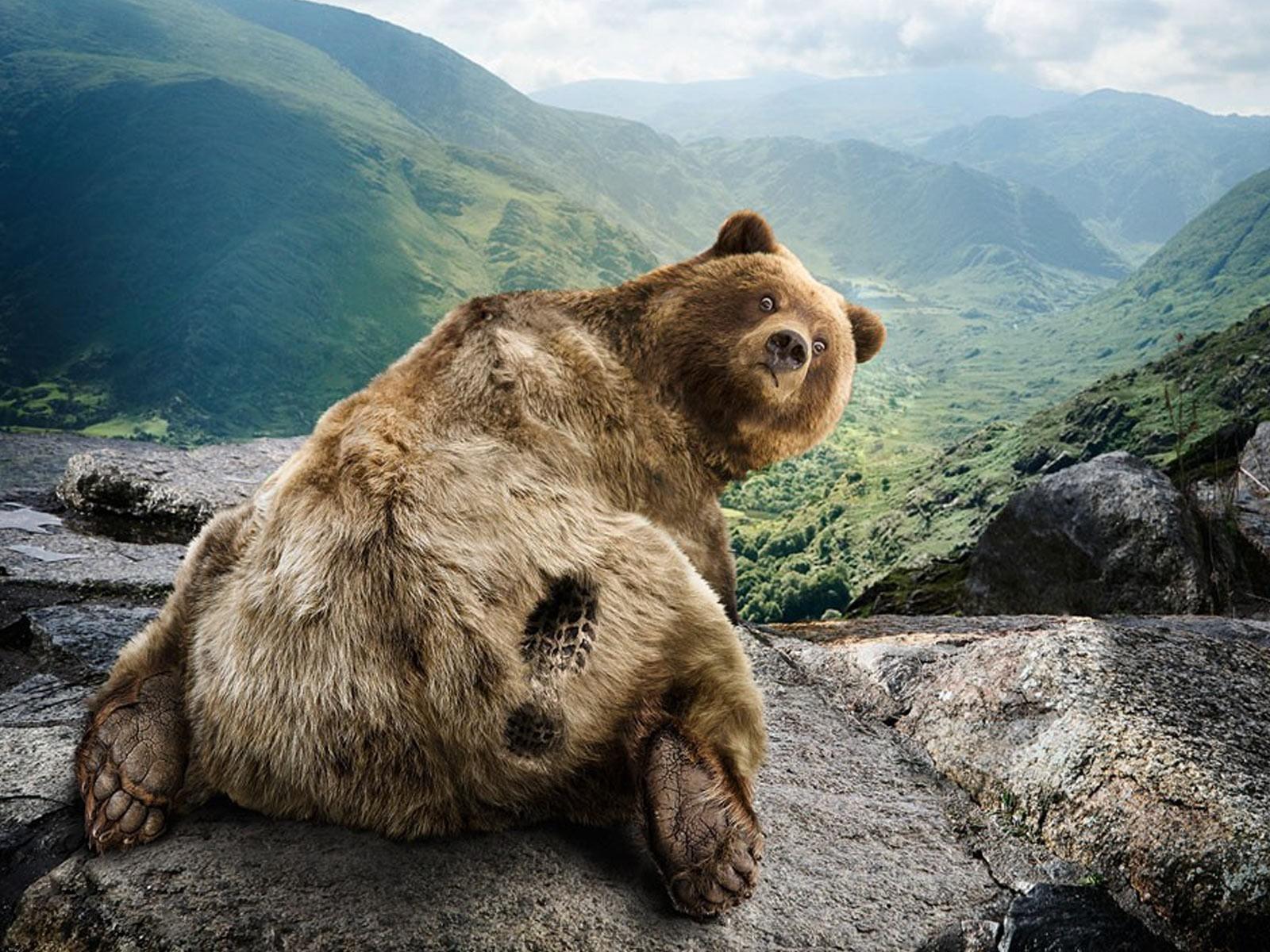 след медведя картинка для детей