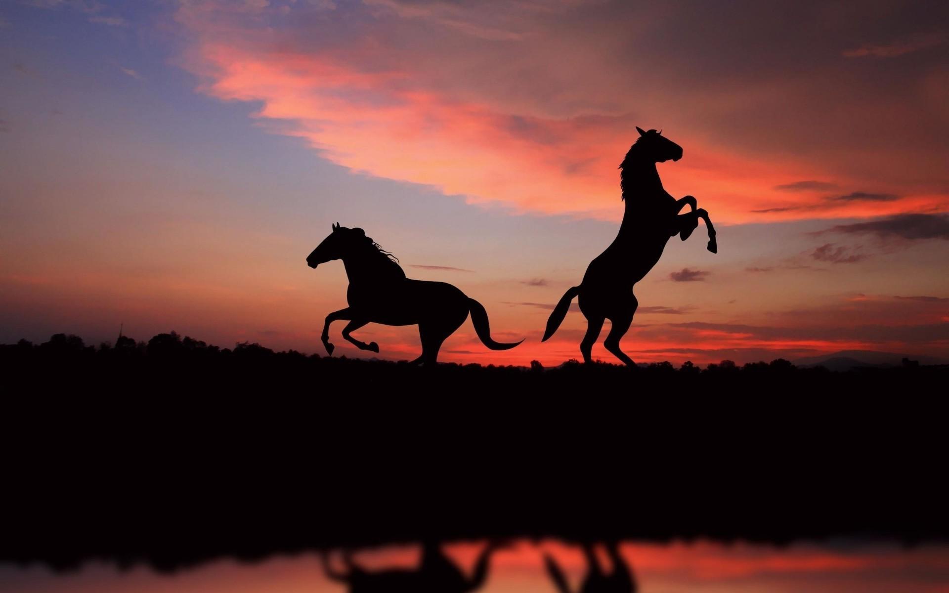 Картинки с изображением лошадей на восходе и закате, открытки свадьбе картинки