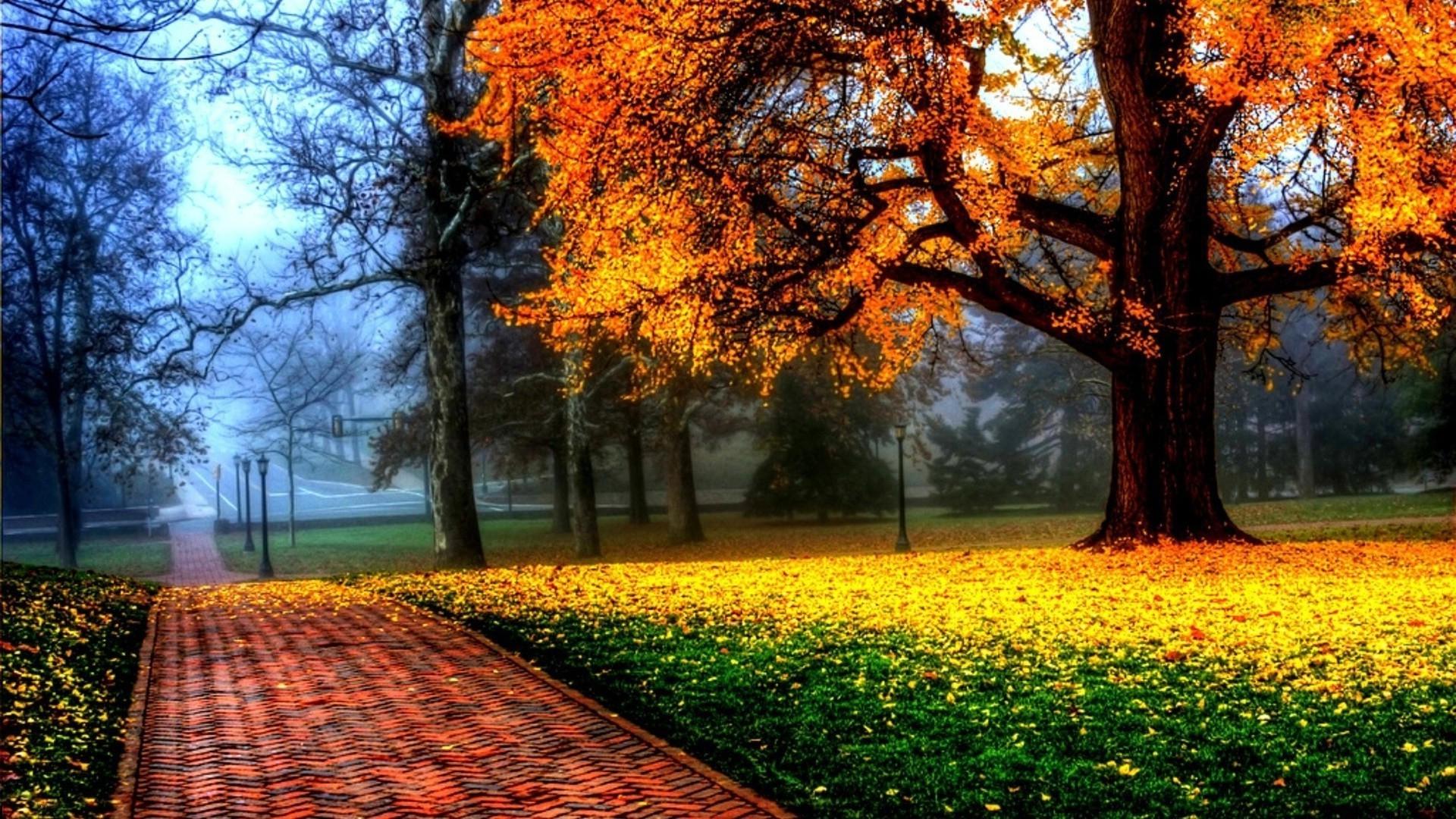 Осень в парке смотреть