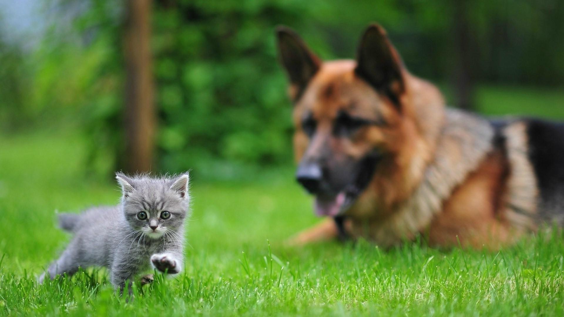 постановки картинки на рабочий стол с собачками и котятами были ситуации, когда