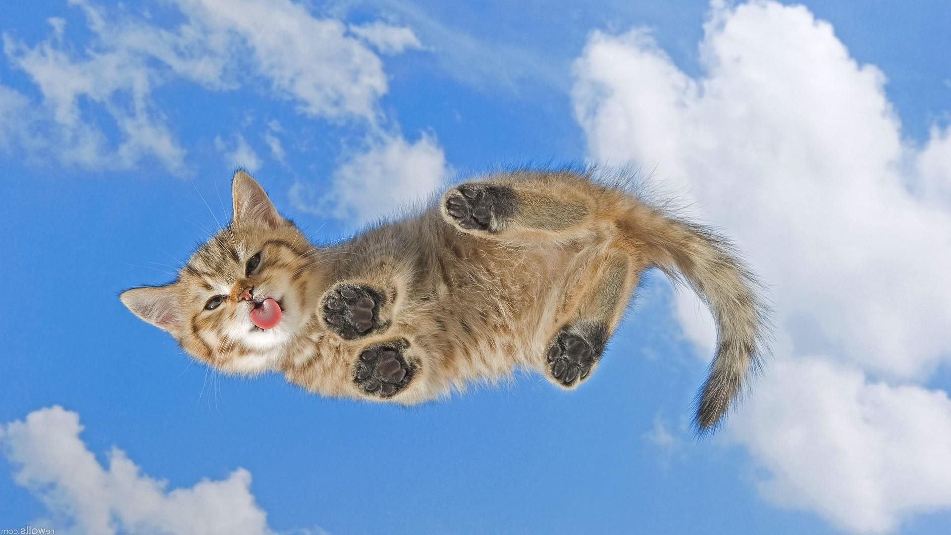 живые обои на рабочий стол кошка ходит по монитору № 177719  скачать