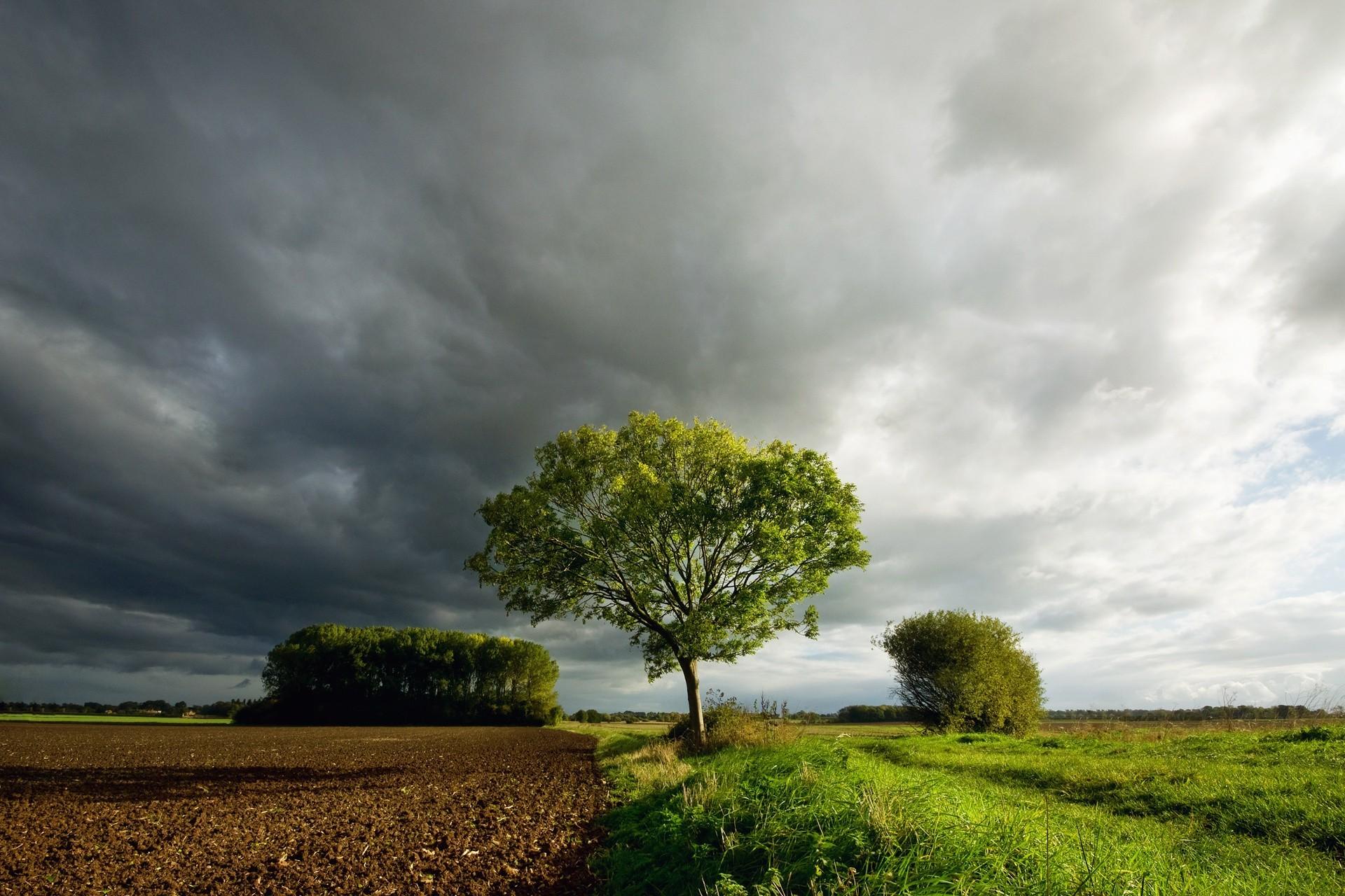 пансионат тюмени фото одинокого дерева подход работе
