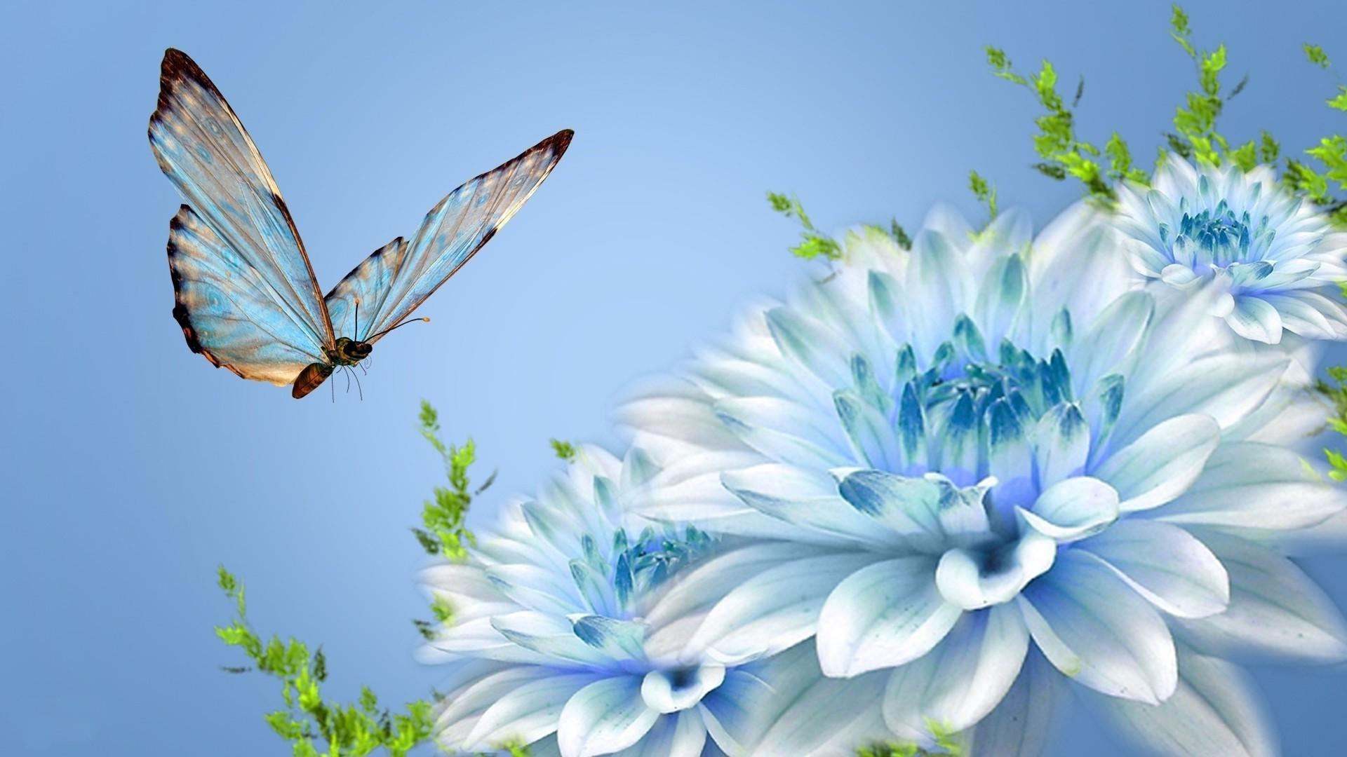 Фото на голубом фоне цветы