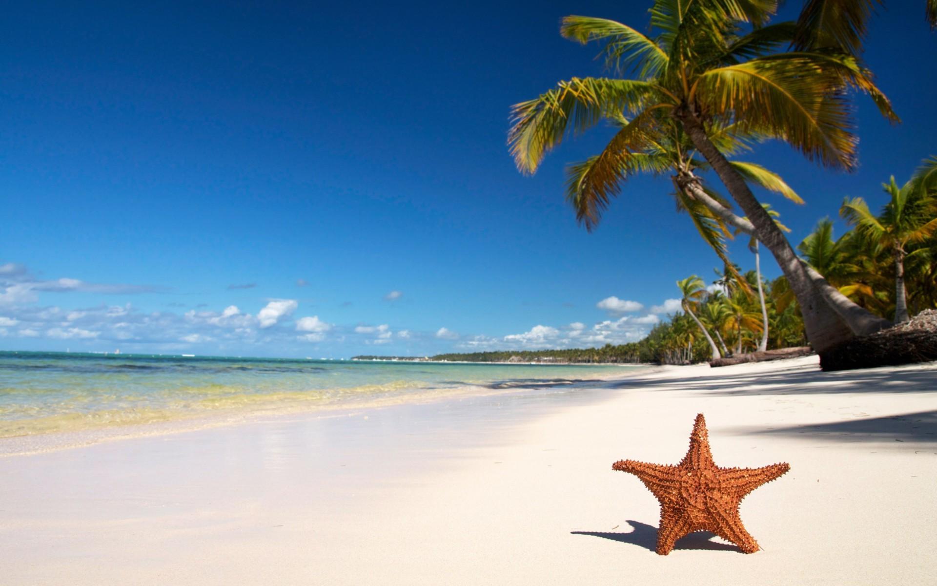 Пляж с пальмами очень