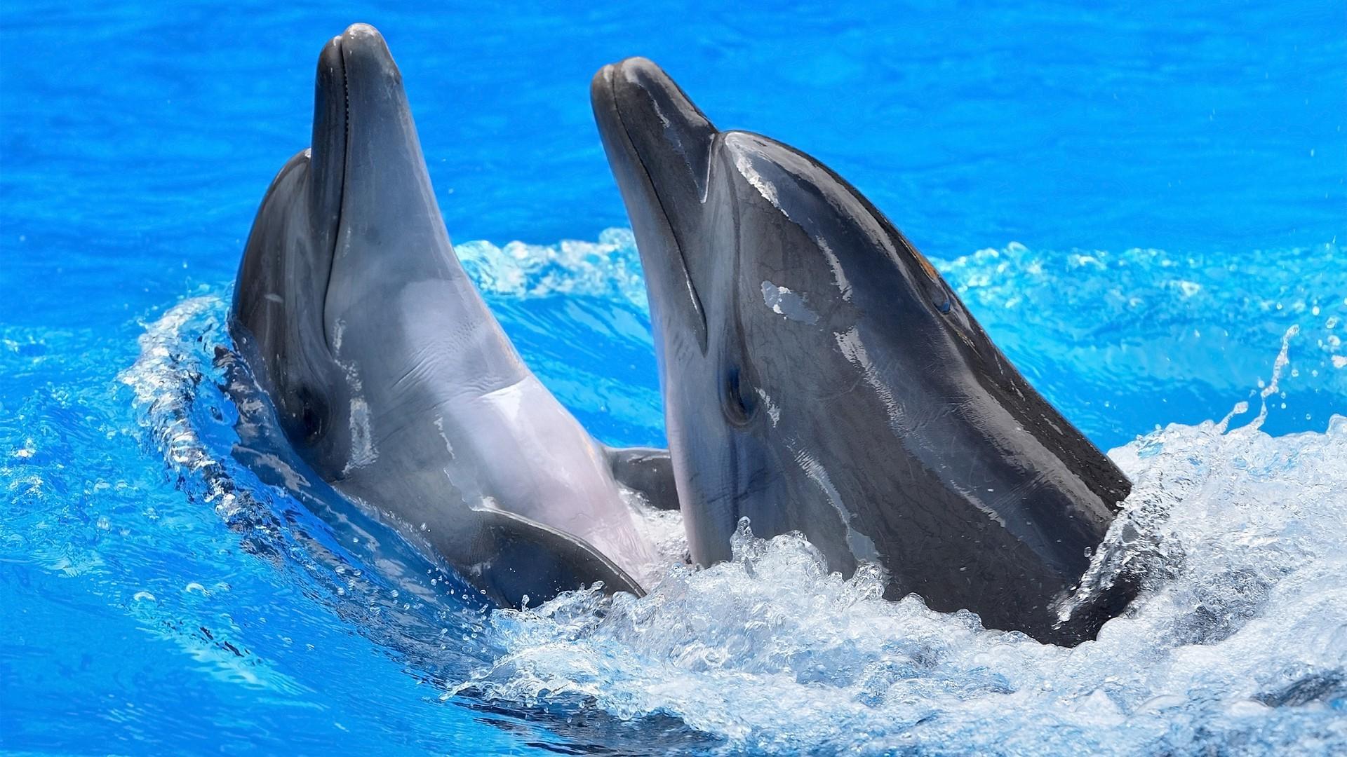 День, картинки с морем и дельфинами