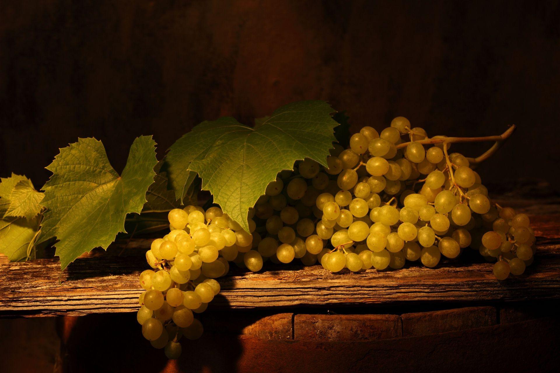 Виноградная лоза обои для рабочего стола