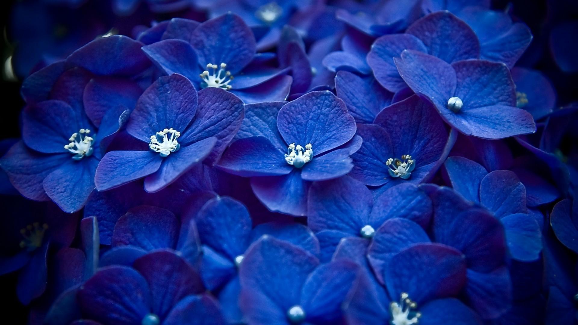 Обои синие, цветы. Цветы foto 8