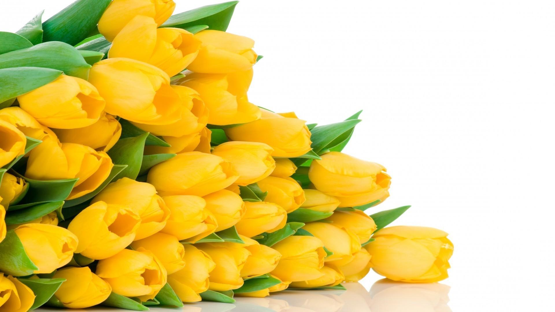 Картинки цветы тюльпаны на рабочий стол, технике торцевание