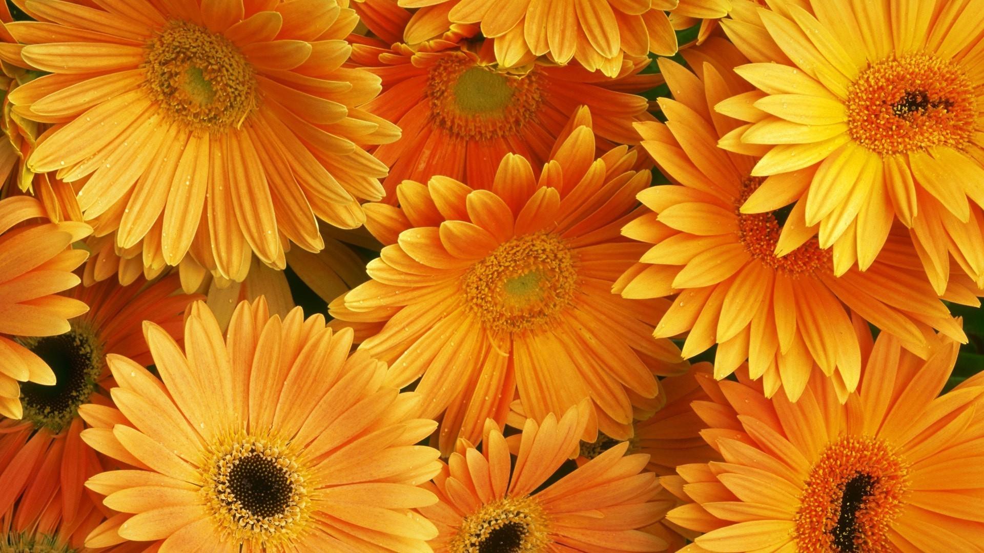 Обои и картинки цветы на рабочий стол