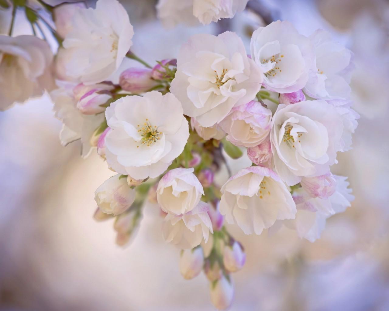 Весна - обои на телефон бесплатно.  Обои на Телефон Цветы