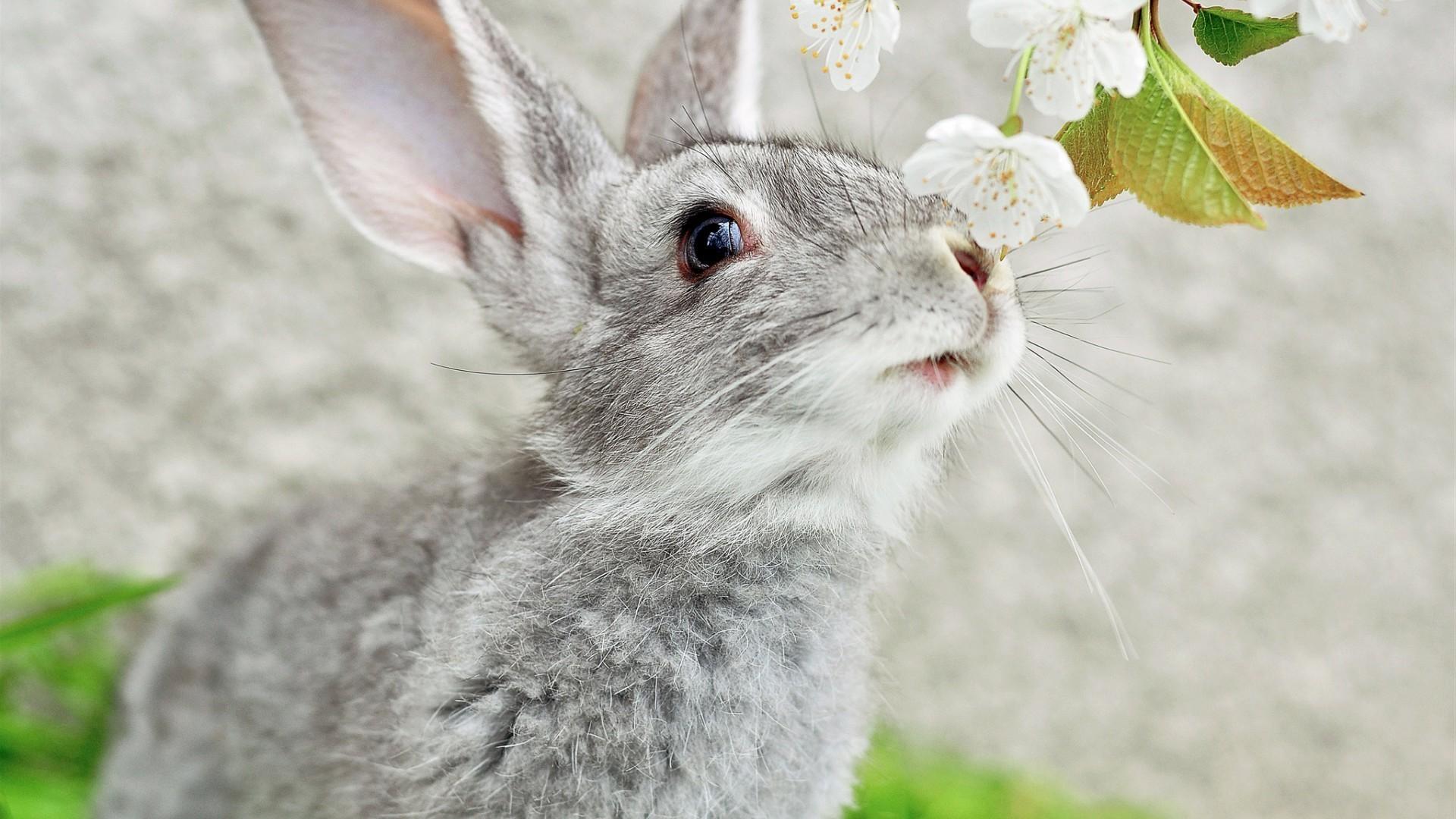 природа животные заяц nature animals hare  № 103340 без смс