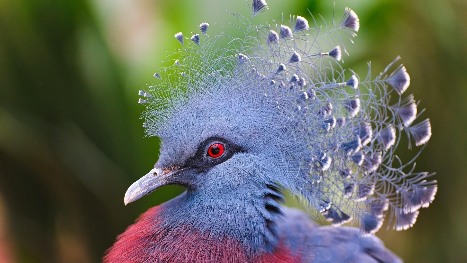 перламутровая птичка анонимно