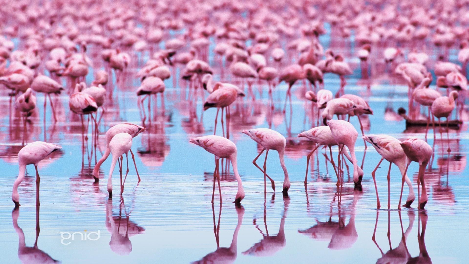 фламинго статус