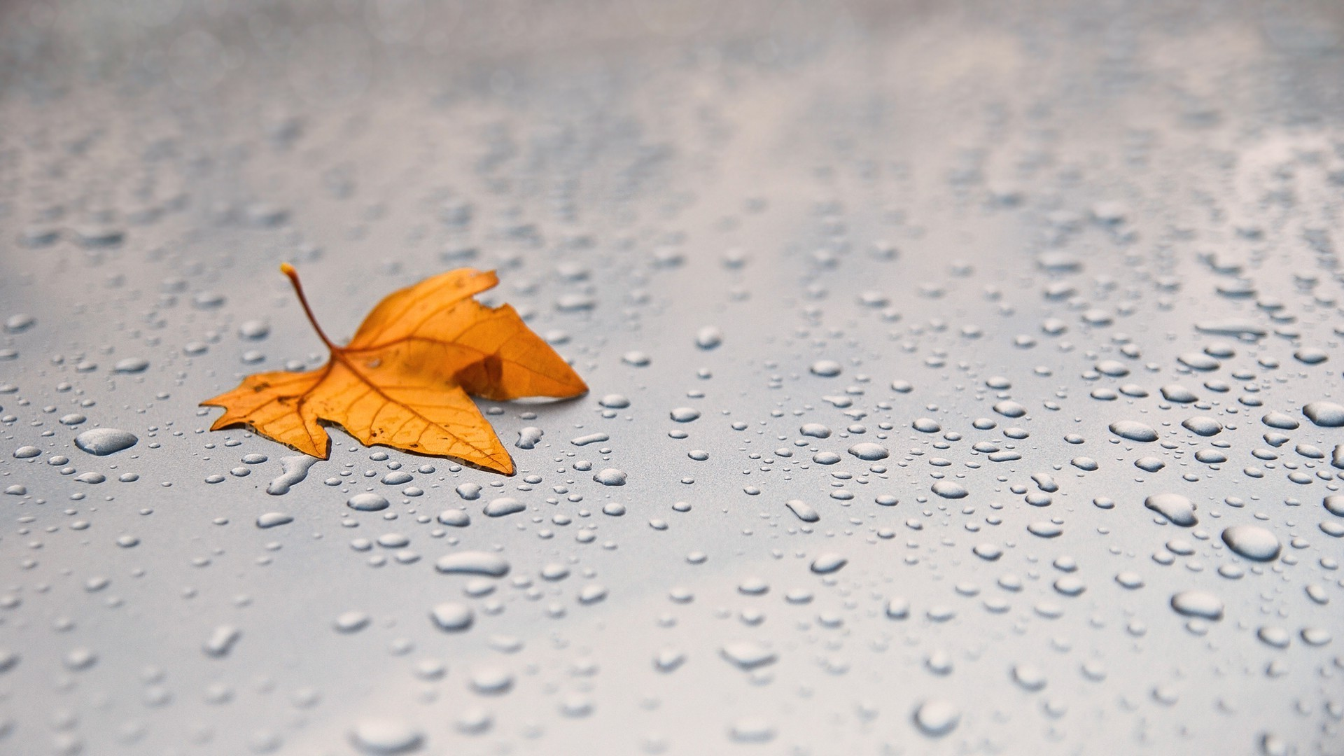 прекрасный обои на рабочий стол осень листья дождь впрочем, даже