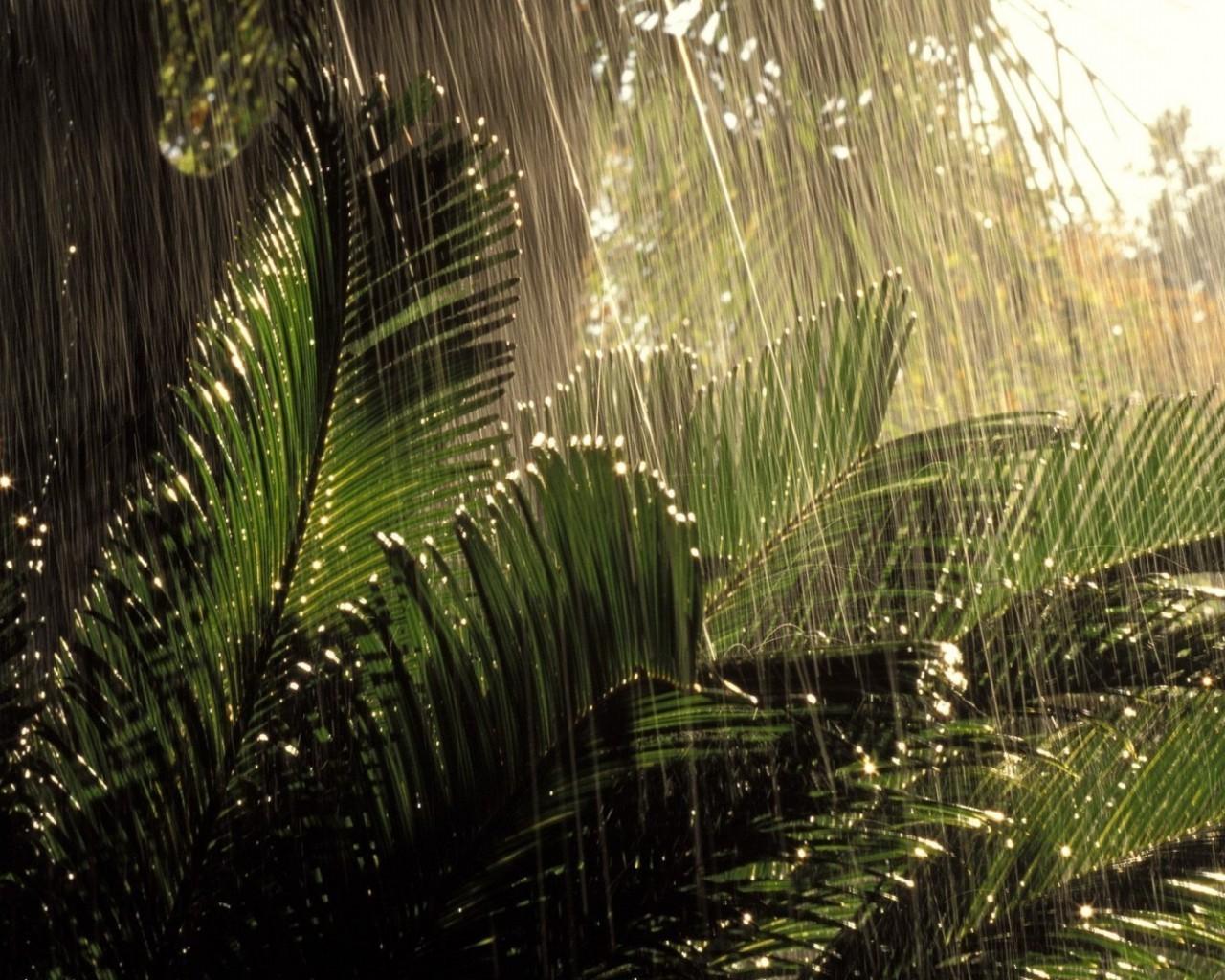 Тропические листья обои на рабочий стол