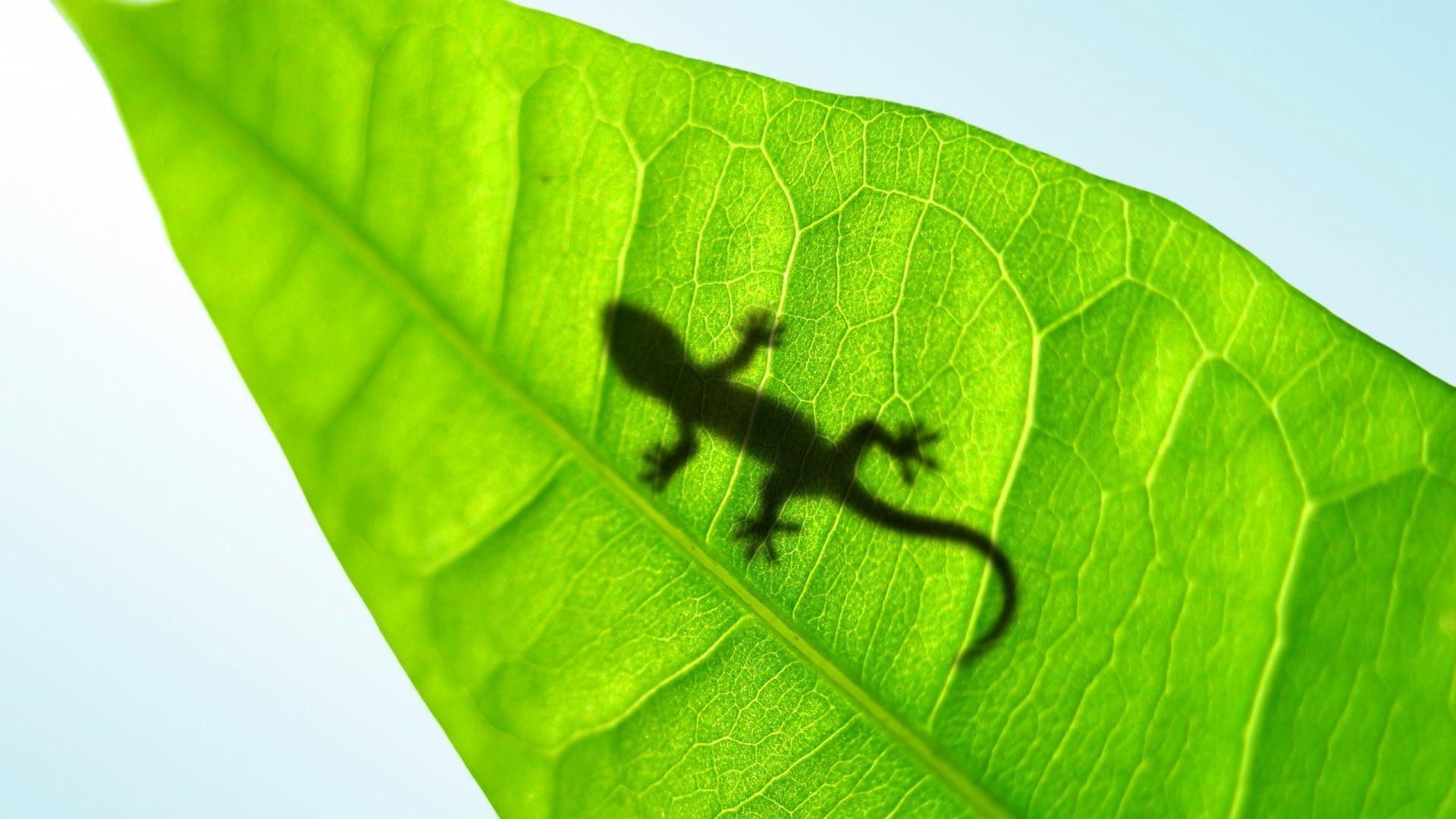 Зеленая ящерица в листьях бесплатно