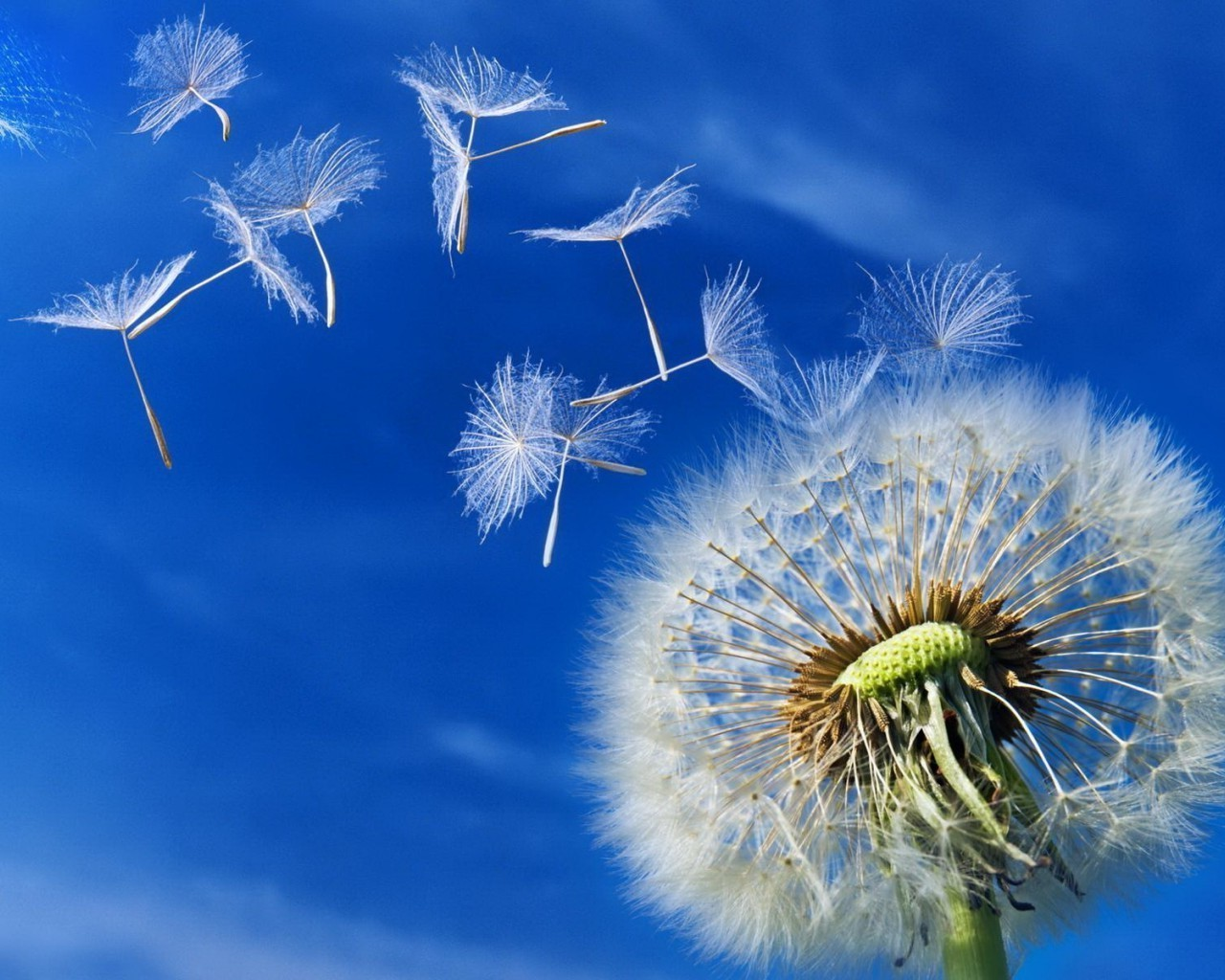 wind pollination Wind-pollinated definition, being pollinated by airborne pollen see more.