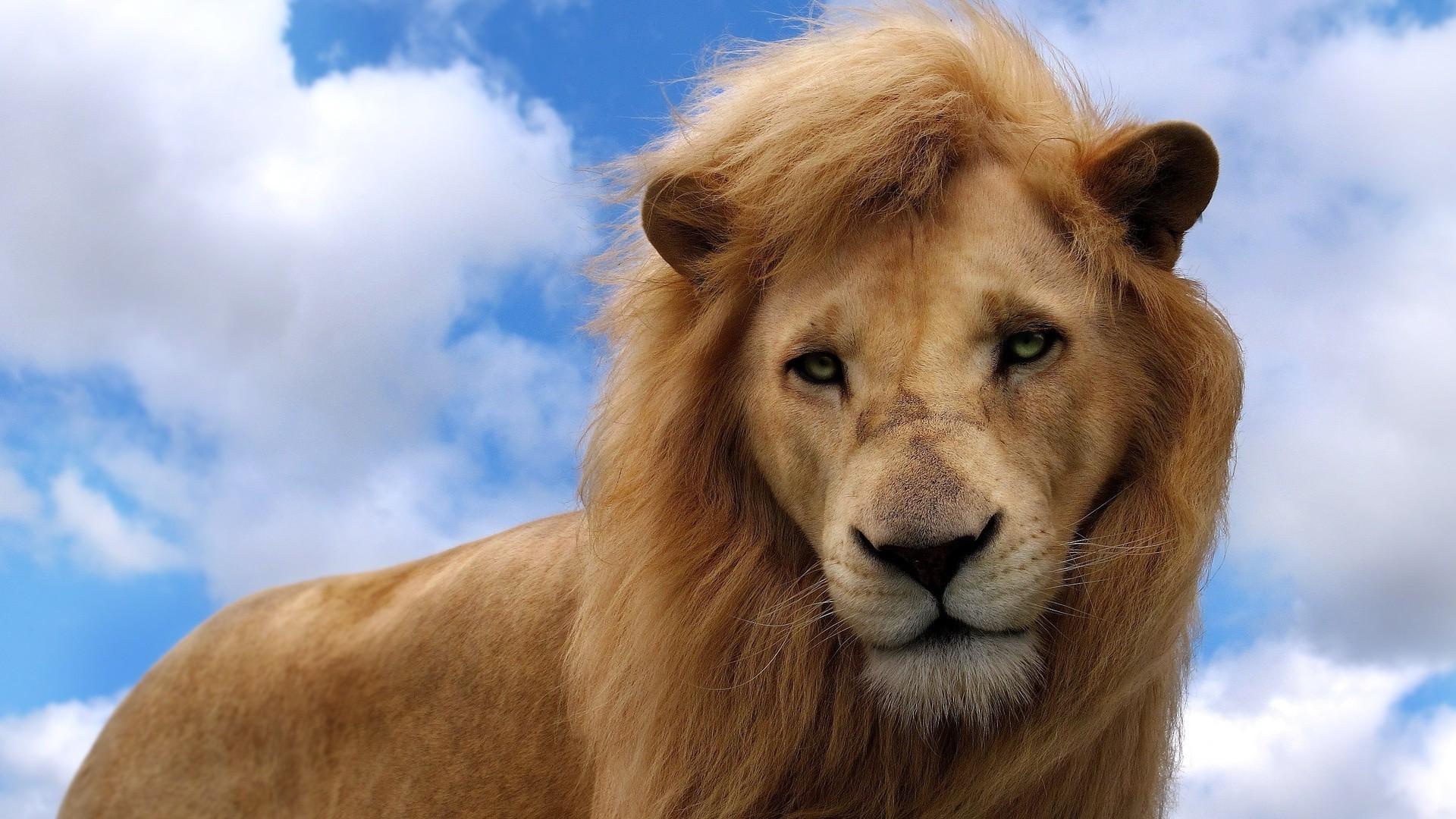 Фото высокого качества львы на фон телефона нужен