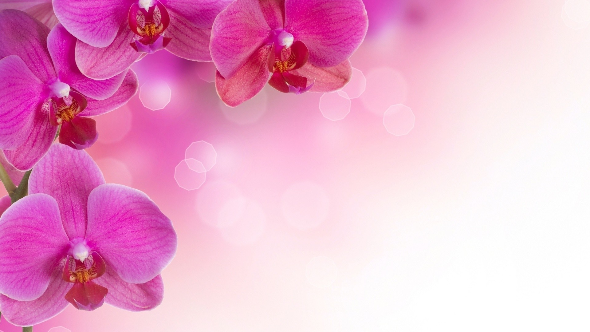 поздравление с днем рождения на визитке с цветами