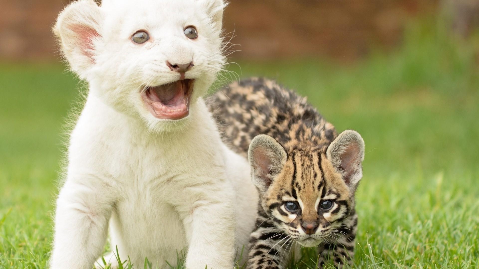 Смешные милые картинки с животными