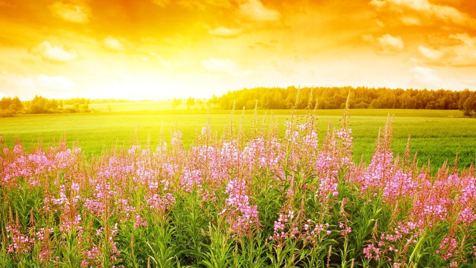 Нарисовать открытку, открытки пейзажем утро летом